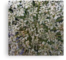 Wildfower Macro series: Queen Anne's Lace , Part Two Canvas Print