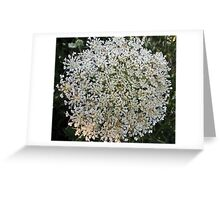 Wildfower Macro series: Queen Anne's Lace , Part One  Greeting Card