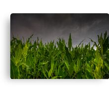 Foliage vs Clouds Canvas Print