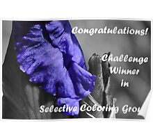 Selective Coloring Challenge Winner Banner Poster