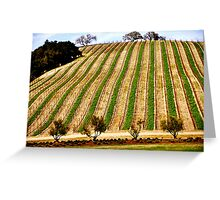 Vineyard Hill.. Greeting Card