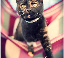 tortie by kirst68