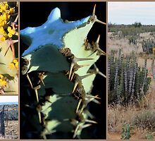 Collage - Noorsveld  - Jansenville, Suid-Afrika by Rina Greeff