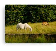 Irish Horses Canvas Print