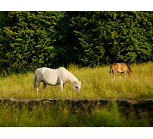Irish Horses Photographic Print