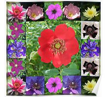 Essex Flowers Collage featuring Dreamy Wild Roses Poster
