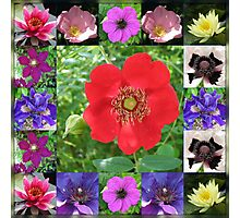 Essex Flowers Collage featuring Dreamy Wild Roses Photographic Print