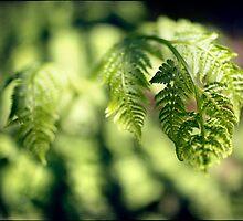 Fern leaf by Adriano Carrideo