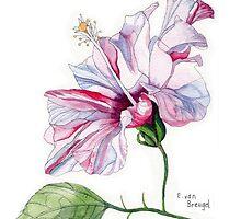 Single Pink Hibiscus Flower by Esmee van Breugel