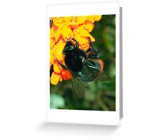 Bumble Bee on Berberis Flowers Greeting Card