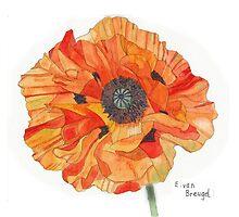 Single Orange Poppy by Esmee van Breugel