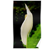 Exotic Flowers Poster