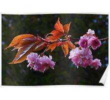 Ornamental Fruit Tree Blossom Poster