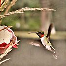 Little Hummer by Shelly Harris