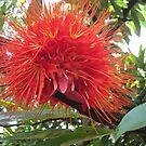Strange  and beautiful flower by Esperanza Gallego