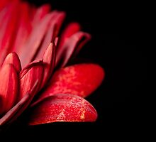 Red Crown by Gben