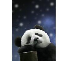 Sleeping Panda Photographic Print