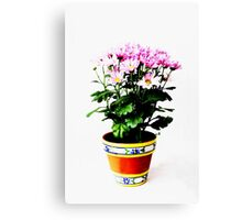 Chrysanthemums Canvas Print