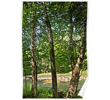 Yellow Birch by the river Poster
