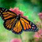 California Monarch by Chris Lord