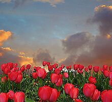 Forever Tulips by Christine Lake