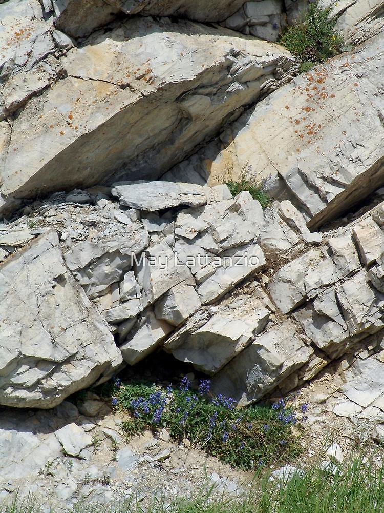 BLUE BOUQUET ON THE ROCKS - ROADSIDE GLACIER NATIONAL PARK by May Lattanzio