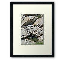 BLUE BOUQUET ON THE ROCKS - ROADSIDE GLACIER NATIONAL PARK Framed Print