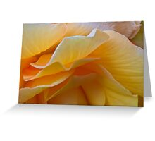Begonia Macro Greeting Card