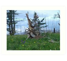 ROOT SCULPTURE IN A BURN - NR BROWNING, MT Art Print