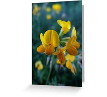 Wildflower series: Birdsfoot Trefoil, No. 1 Greeting Card