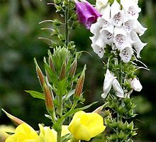 Foxgloves and Primrose by missmoneypenny