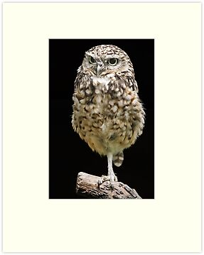 Burrowing Owl by Mark Hughes