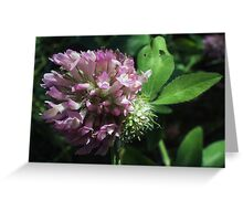 Wildflower series: Wild White Clover, No. 2 Greeting Card