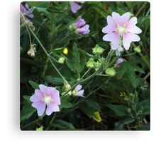 Wildflower series:  Mallow Canvas Print
