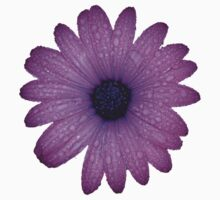 Purple African Daisy with Raindrops Isolated One Piece - Short Sleeve
