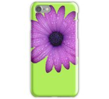 Purple African Daisy with Raindrops Isolated iPhone Case/Skin