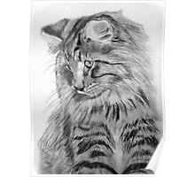 Norwegian Forest Cat Poster