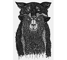 Sheep in Wolfs Clothing  Photographic Print