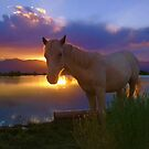 Evening Skies Benediction~ Little Chief White Cloud my adopted wild horse enjoying his favorite place down at pond, White Pine County, Nevada. by Jeanne  Nations