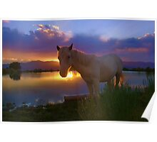 Evening Skies Benediction~ Little Chief White Cloud my adopted wild horse enjoying his favorite place down at pond, White Pine County, Nevada. Poster