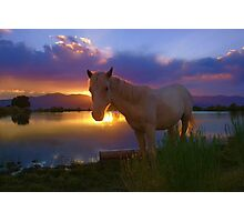 Evening Skies Benediction~ Little Chief White Cloud my adopted wild horse enjoying his favorite place down at pond, White Pine County, Nevada. Photographic Print