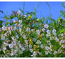 Summer Hedgerows Photographic Print