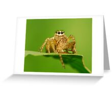 jump spider Greeting Card