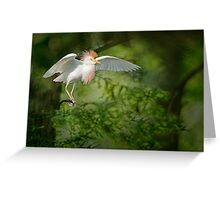 Cattle Egret in Cypress Swamp Greeting Card