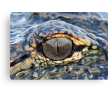 The eye of the gator ! Canvas Print