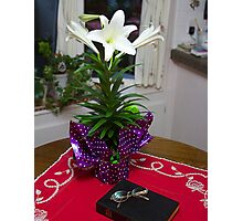 The Easter Lilly Photographic Print