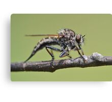 Cute and Fluffy Robber Fly Canvas Print