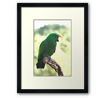 Eclectus Shouting The Odds Framed Print