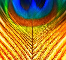 Peacock Feather Art by David J Baster