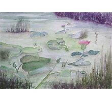 Wetland Frogs. Photographic Print